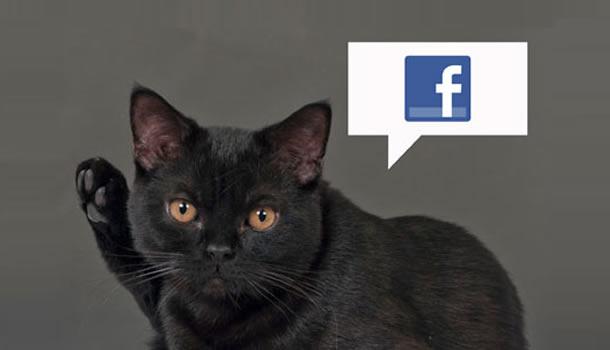 Inventia inedita care te anunta pe Facebook cand a mancat animalul tau. Cum iti poti hrani pisica sau cainele prin telefon