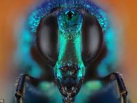 FOTO Insectele vazute de aproape. Foarte aproape