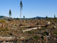 Resursele Pamantului pentru acest an s-au epuizat, spun ecologistii