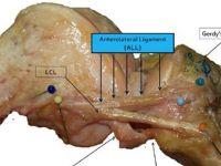 Un nou organ a fost descoperit in corpul uman, dupa sute de ani de studii