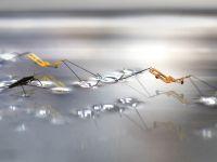 Acest robot minuscul poate merge si sari pe apa! VIDEO