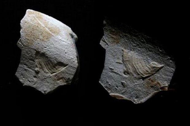 Imaginea pasarii din logo-ul Twitter, descoperita de arheologi pe o piata scrajelita in Paleolitic