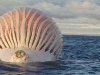 Obiect  extraterestru  fotografiat de un pescar pe mare: ce a descoperit cand s-a apropiat de el
