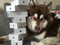 Cine este barbatul care i-a cumparat cainelui 8 telefoane iPhone 7! Imaginile care fac senzatie pe net