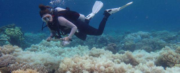 Un dezastru ecologic fara precedent! Ce se intampla cu Marea Bariera de Corali