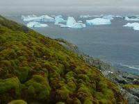 Incalzirea climei transforma radical Antarctica!  Ne intoarcem cu milioane de ani in urma