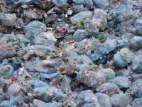 Solutie neasteptata pentru reducerea poluarii! Ce au descoperit cercetatorii intr-o groapa de gunoi