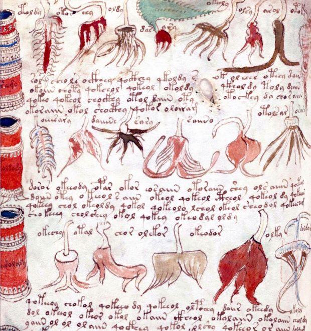 Un computer a descifrat cel mai misterios manuscris din lume. Ce scrie in primul rand al textului