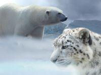 Jumatate dintre specii risca sa dispara din cauza schimbarilor climatice