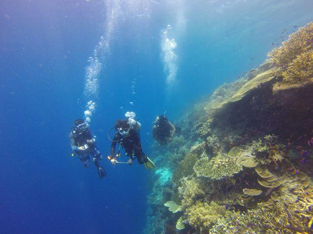 O zona crepusculara, descoperita in adancul oceanelor. Aici traiesc specii necunoscute pana acum