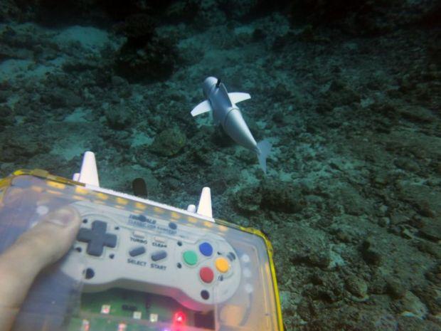 O romanca a inventat robotul SoFI, care poate inota alaturi de pesti fara sa fie observat