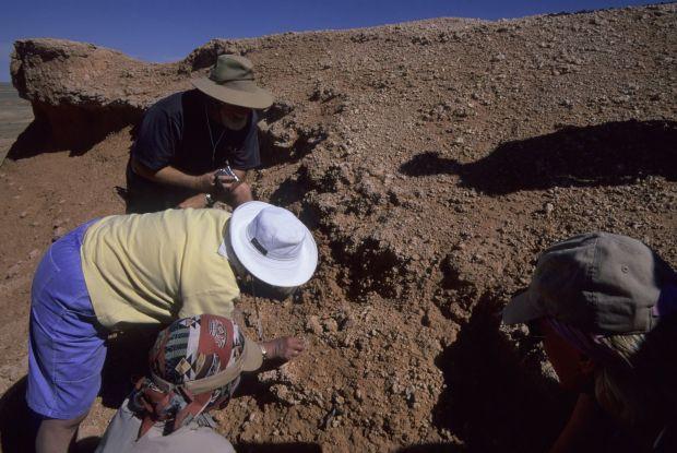 Descoperire uriasa in Transilvania! Este cea mai mare fosila de acest fel din lume