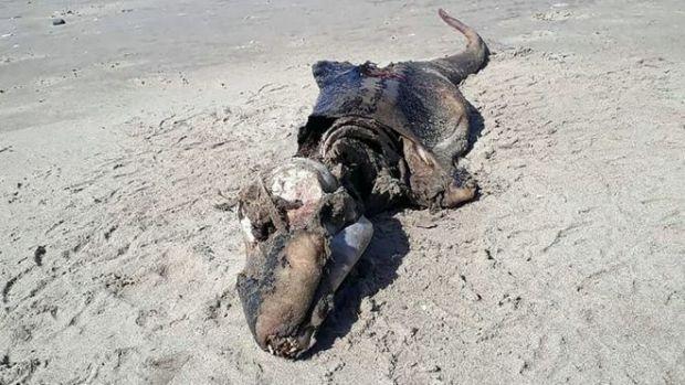 O misterioasa creatura marina a fost descoperita pe o plaja din Marea Britanie. Ce spun specialistii