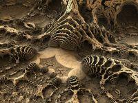 Paleontologii au descoperit o fosila ciudata, de acum jumatate de miliard de ani