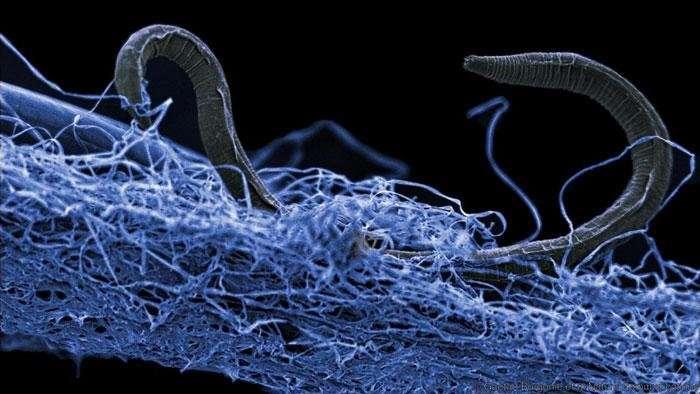 Un ecosistem uriaș, descoperit în adâncurile planetei. Ce specii trăiesc în subteran